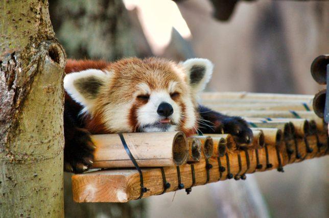 脳がしんどいときには昼寝